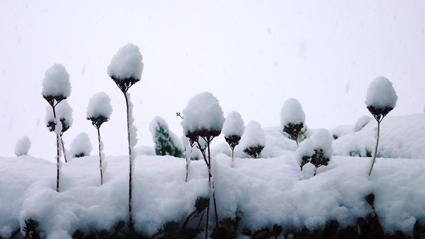 snows-2